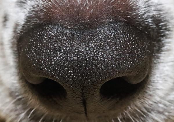 Sniff by Merlin_k