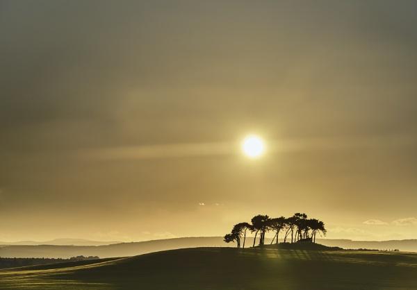 Evening Mist Gollanfield Pines by hwatt