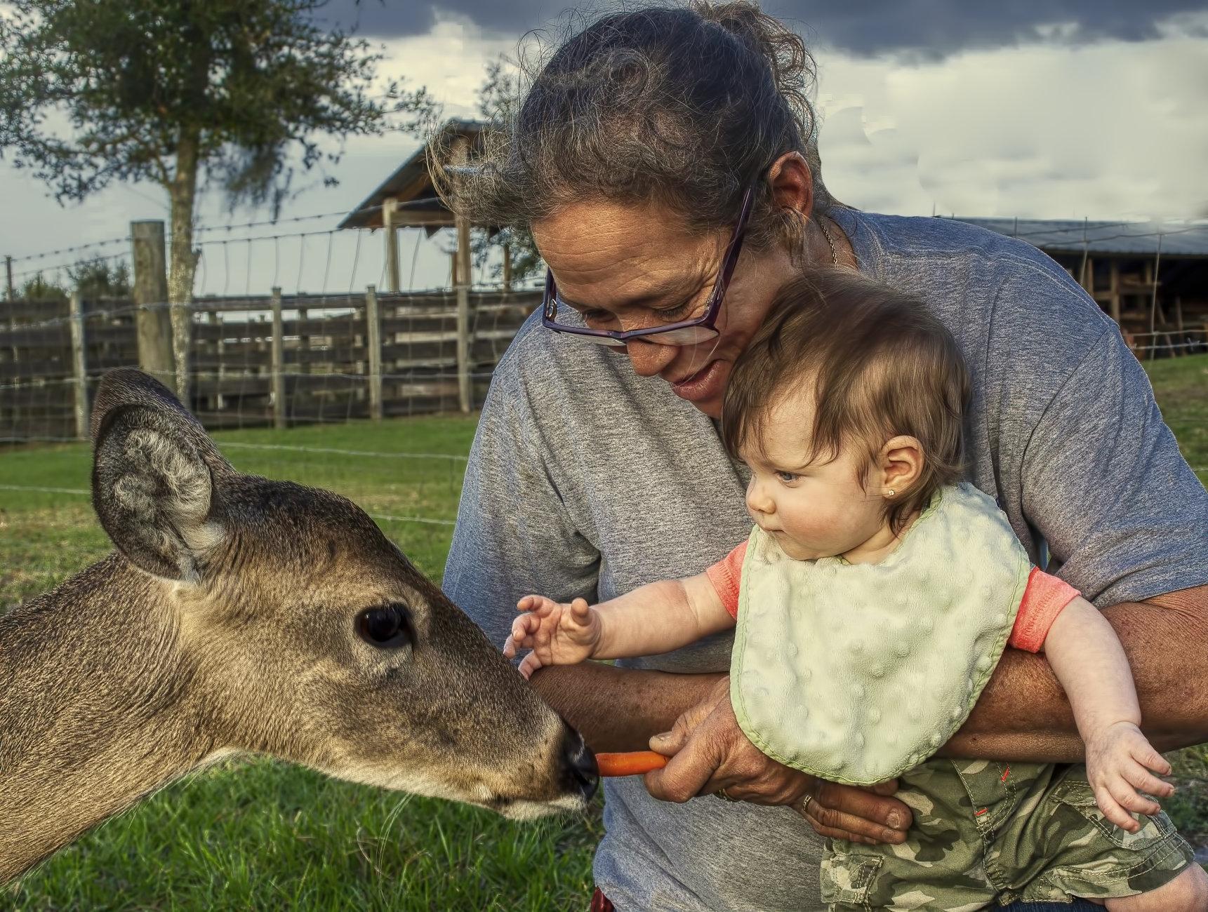 Meeting Lily the deer
