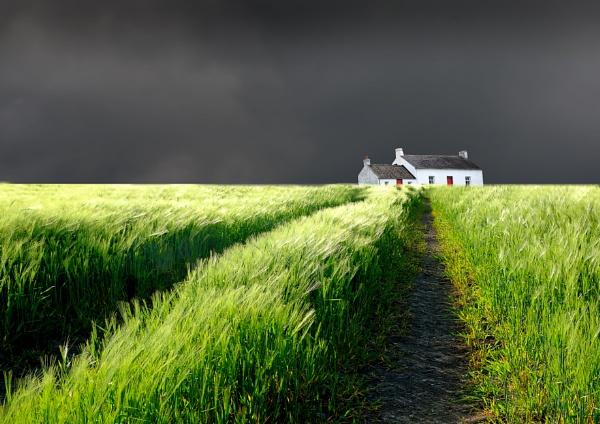 Barley Field by SamCampbell