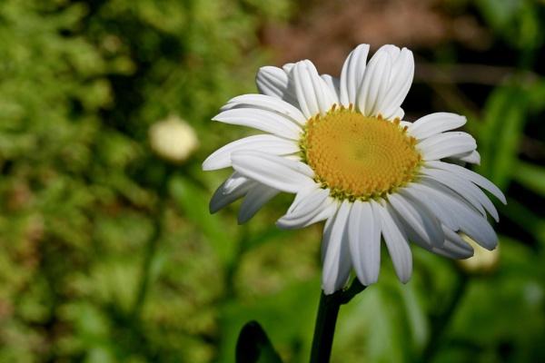 Fresh Flower by Friendlyguy