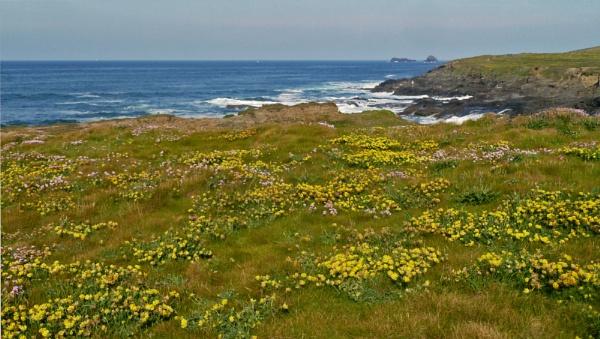 Coastal Flowers - 9 by JuBarney