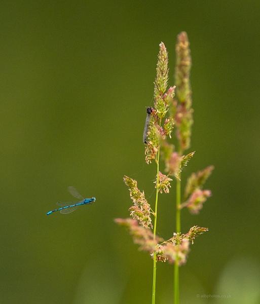 Blue by alanb