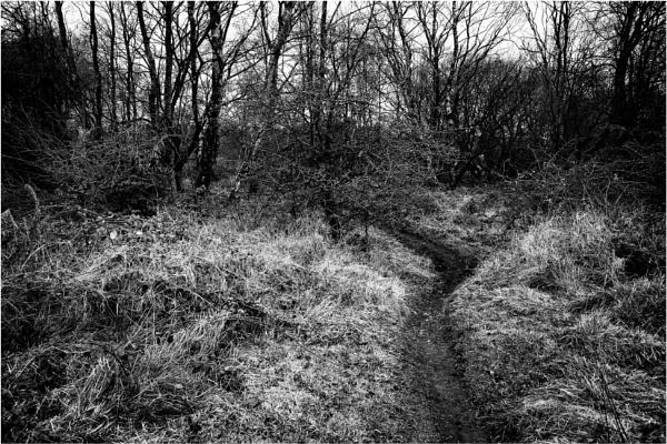 Path by dark_lord
