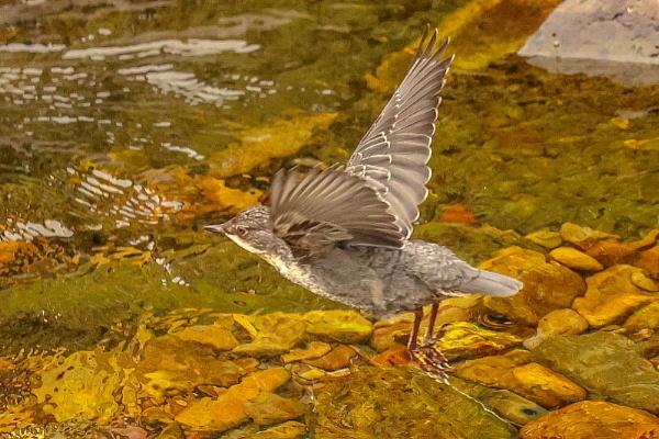 Takeoff. by Lencollard
