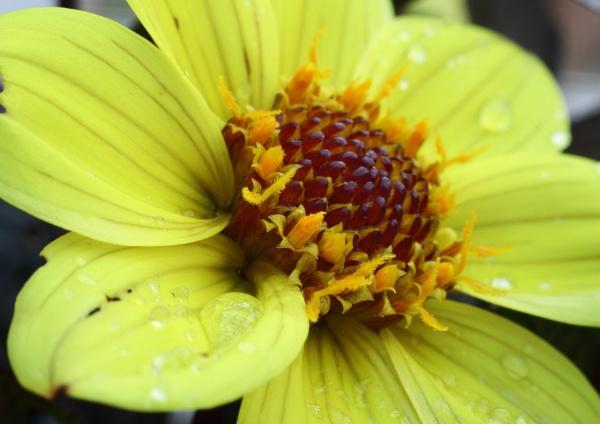 Flower 2 by Philipwatson