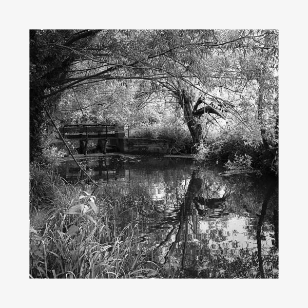 The Weir in Pishiobury Park by AlfieK