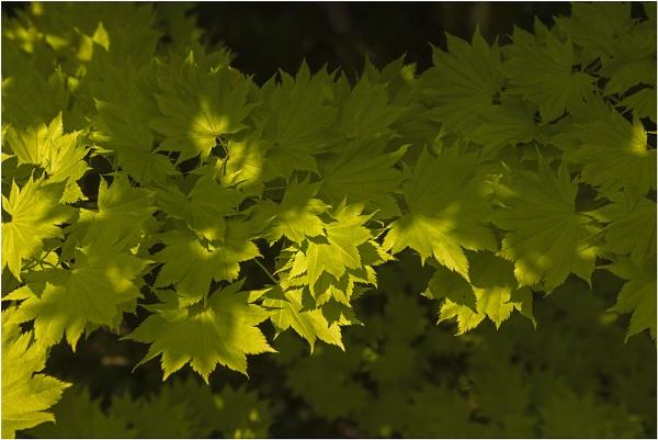 Leaves,Seeds & Flowers : Westonbirt Arboretum by VincentChristopher