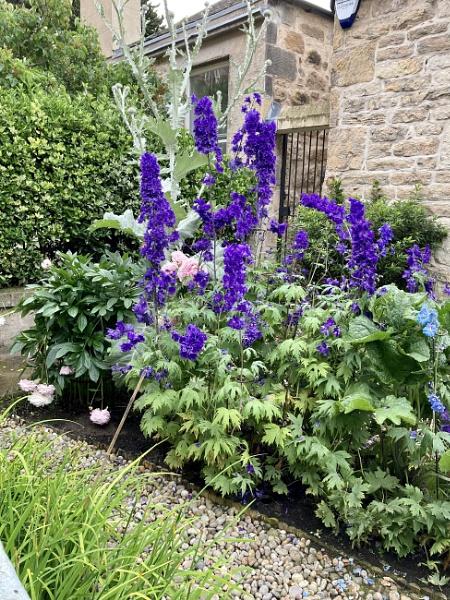 Garden in, Portobello, Edinburgh. by Pinarellopete