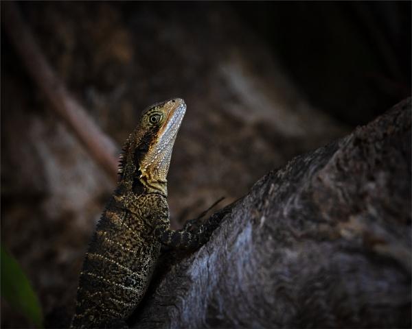 Water Dragon by tvhoward950