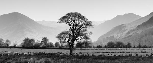 lakeland Tree by Acancarter