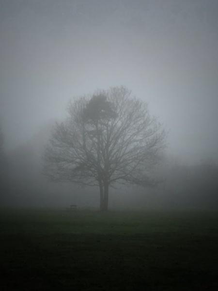 December fog by Kaxxie