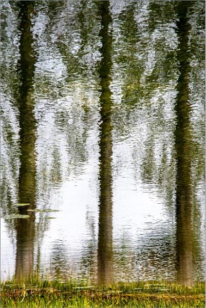 Three poplars by mrswoolybill