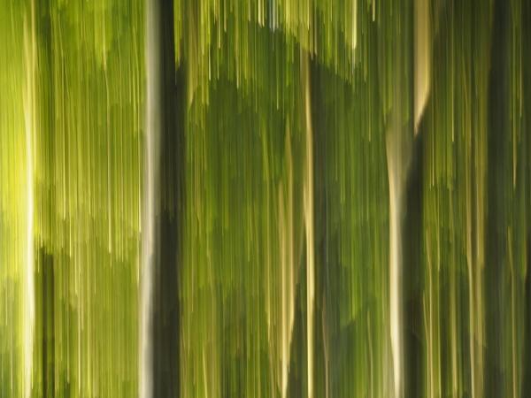 streaks by elmer1
