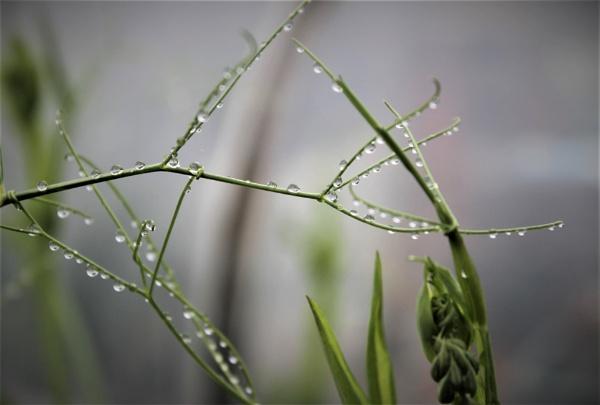 Raindrops by helenlinda