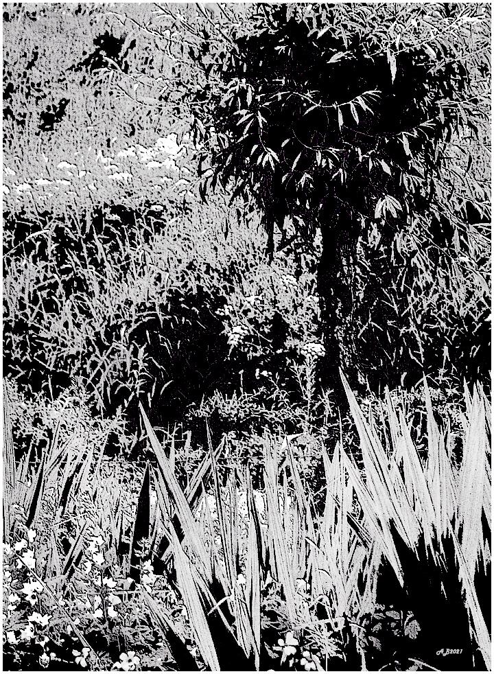 Willow & Weeds