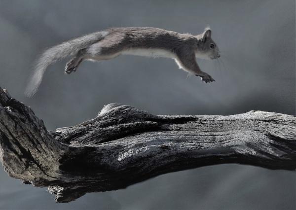 THE JUMP by maratsuikka