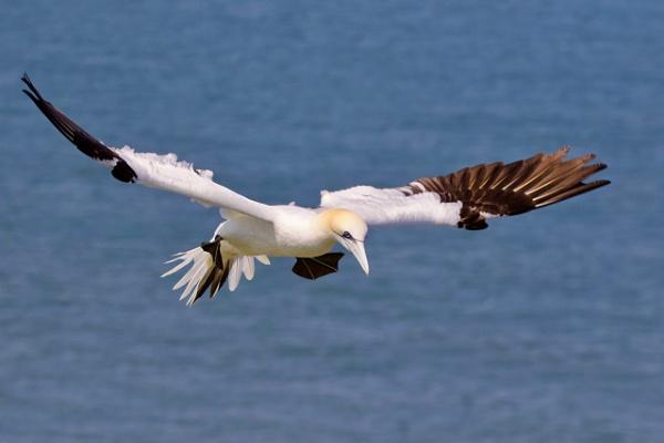 Landing Approach by altosaxman