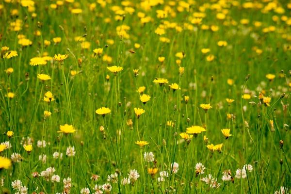 Wisley Floral patterns sets by JackAllTog