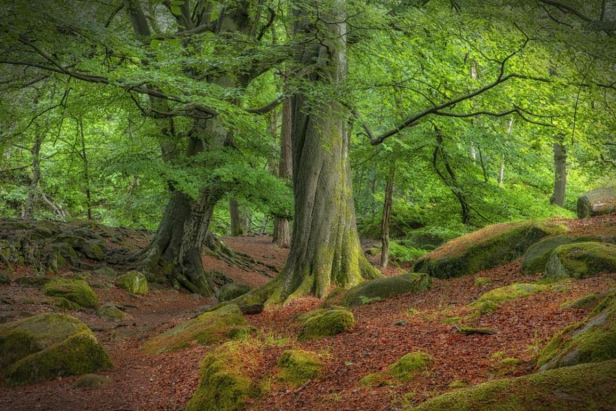 Padley Woods