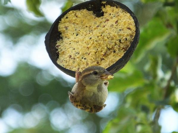Hanging Around by ianmoorcroft