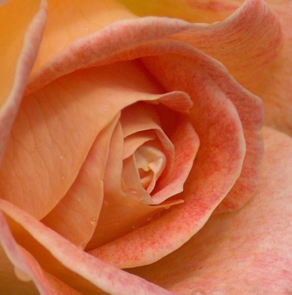 Dreamy Peach by sweetpea62