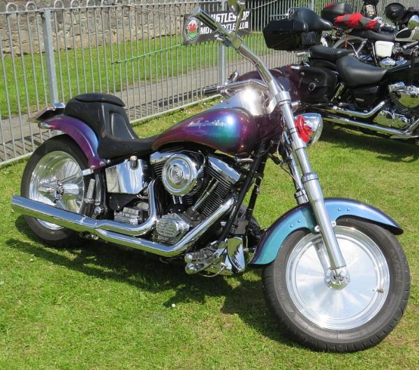 Harley by ddolfelin