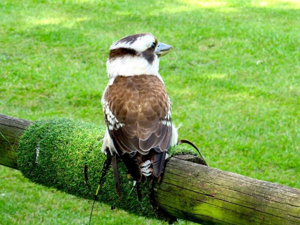 Bird show by ddolfelin
