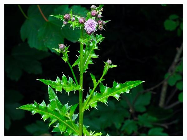 WILD FLOWER. by kojack
