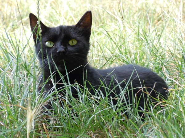 in the grass...4 by laura1