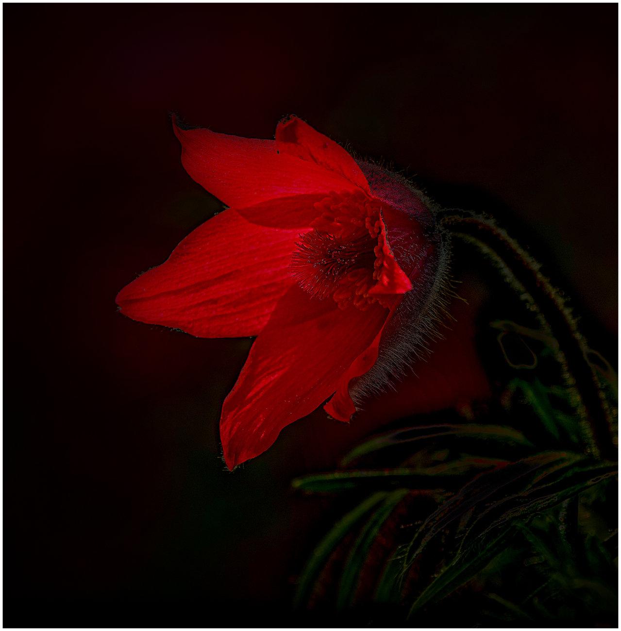 Glowing Bloom