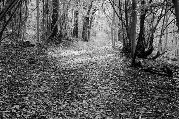 Follow the path by Nikonuser1