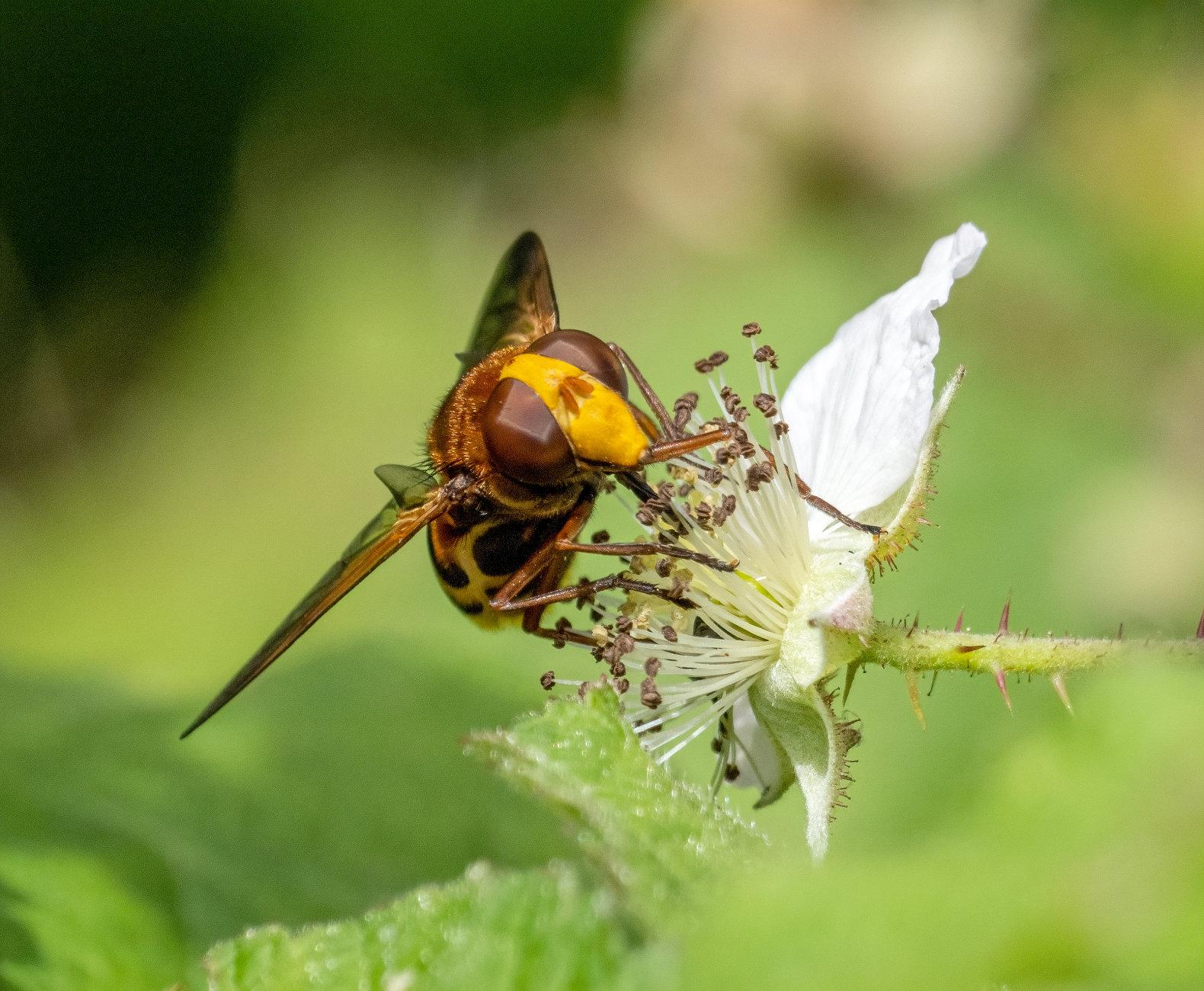 Nectar Gathering