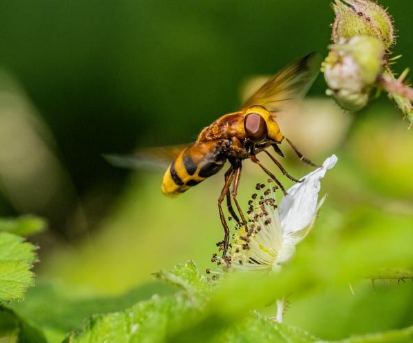 Nectar Gathering V2 by doverpic