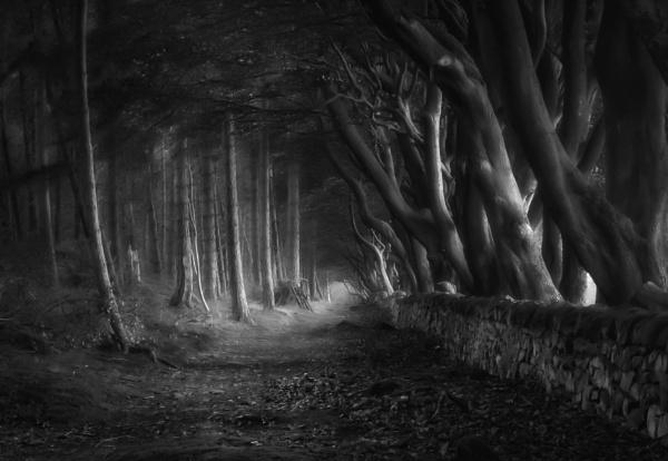 Tree Avenue by Legend147