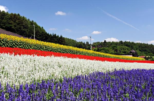 Hokkaido by Uenocats
