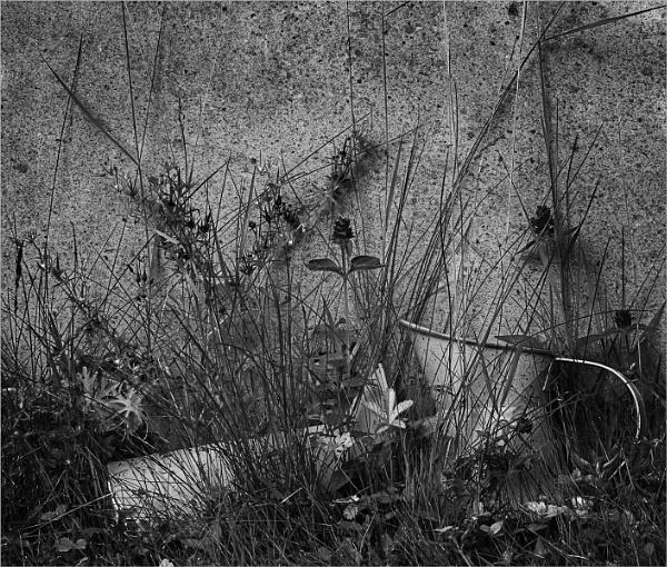 Behind the Headstone by AlfieK