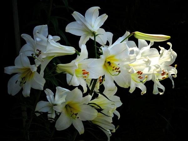 white-yellow by elousteve