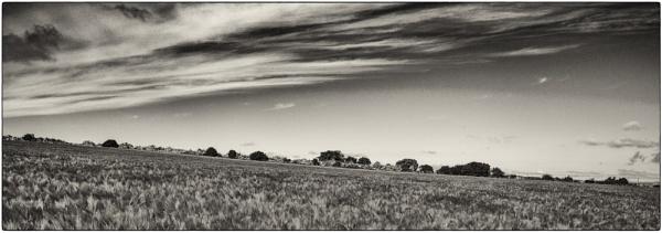 West Across the Field by woolybill1