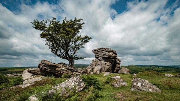 Lone Tree on Dartmoor by topsyrm