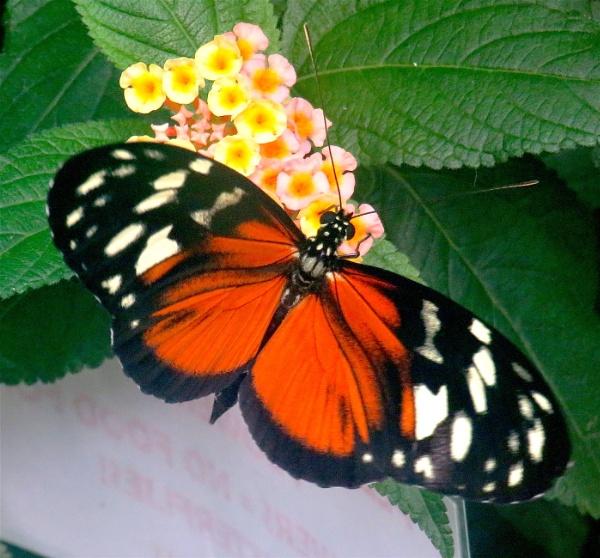 Butterfly by ddolfelin