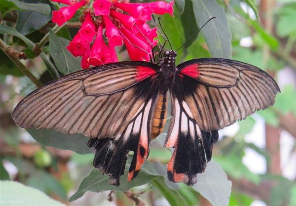 Tatty Butterfly 3 by ddolfelin