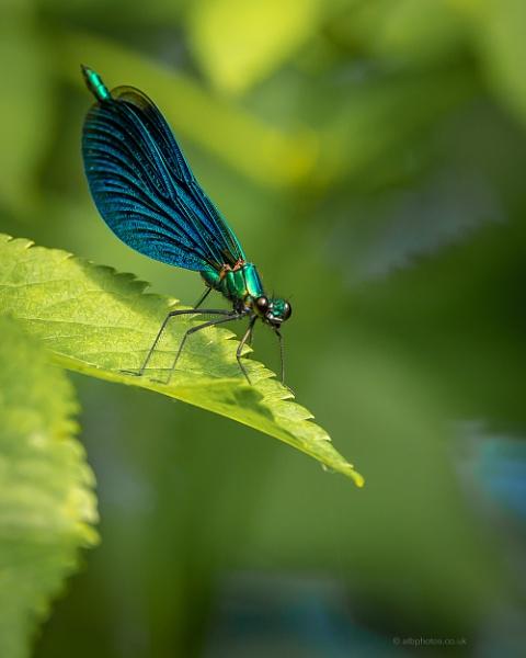 blue n green by alanb