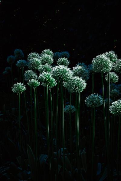 Fortify dark green by manicam