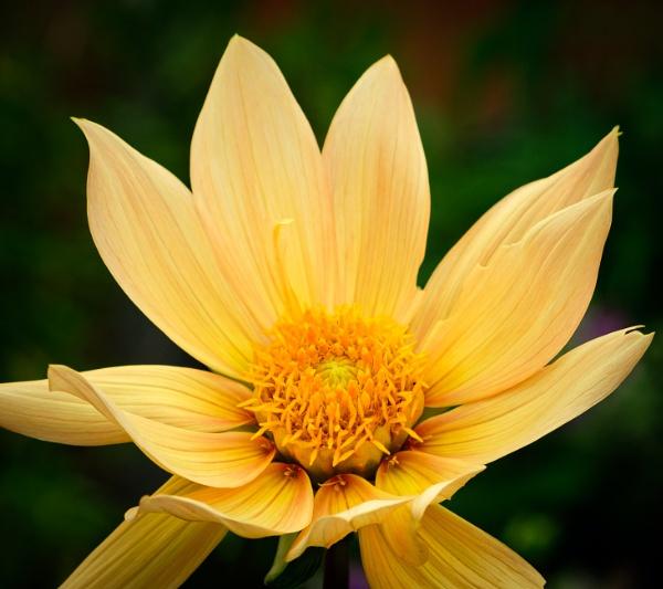 In the garden 7 by Nikonuser1