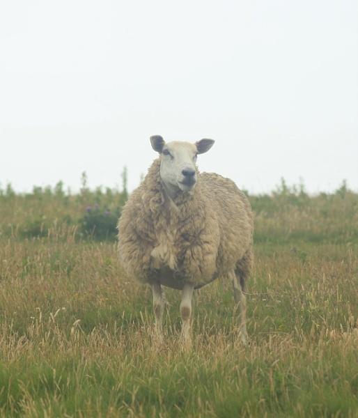 I\'m watching ewe by loobylyn