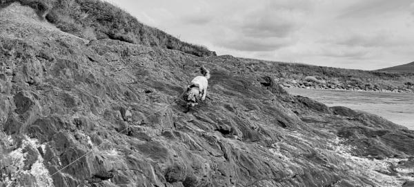 Mountain Goat by woodini254