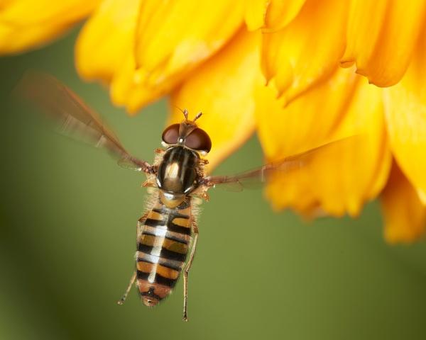 Busy Buzzer by Malfun