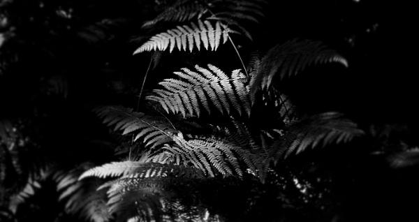 Shady ferns ! by af1