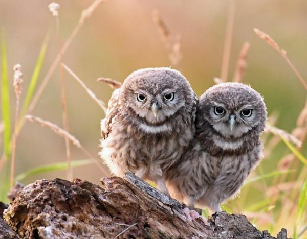 Night Owls by AlexAppleby